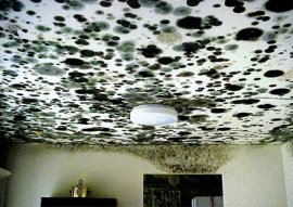 Mould, Mildew, Bacterial fungi Air Quality Solutions Montreal